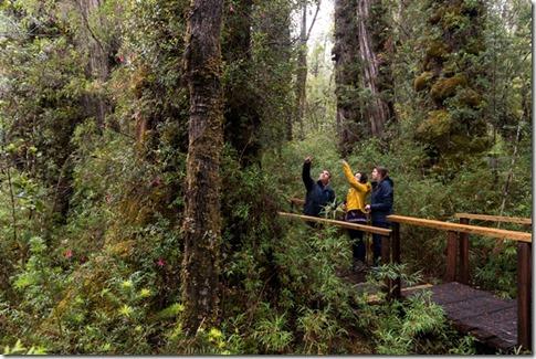 Parque Nacional Alerce Costero y Reserva Costera Valdiviana 1